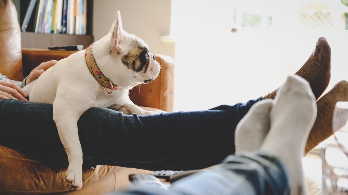 people relaxing at home with dog
